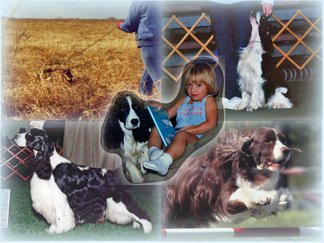 Photo collage of dogs as companions, conformation, tracking, obedience, and agility